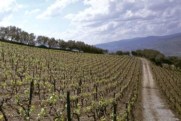 Wine review 2009 quinta do vallado adelaide vintage port - Quinta do vallado ...