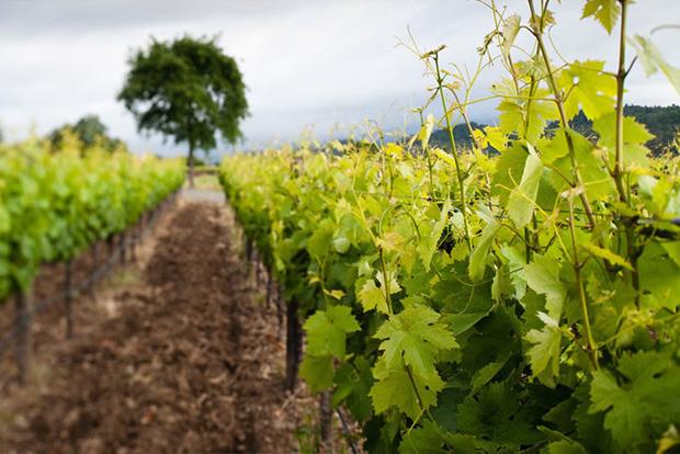 Chiarello Wine
