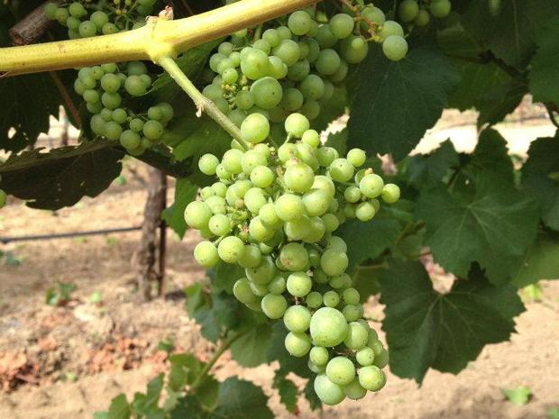Hudson Vineyard Chardonnay