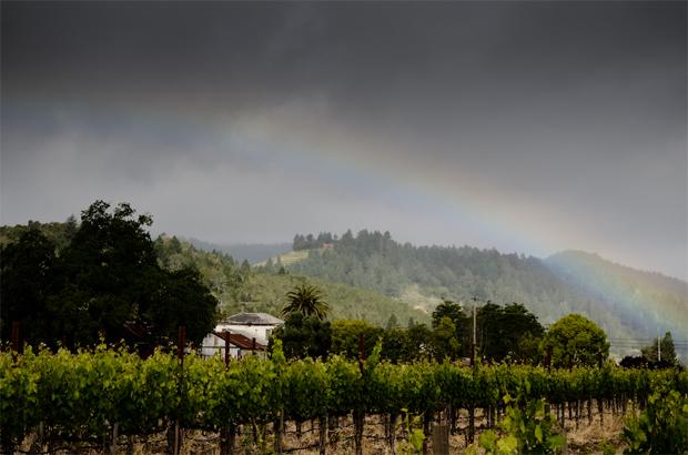 Micahael Chiarello Wine