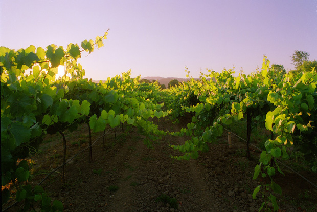 The Rocca Family Vineyard in Napa Valley