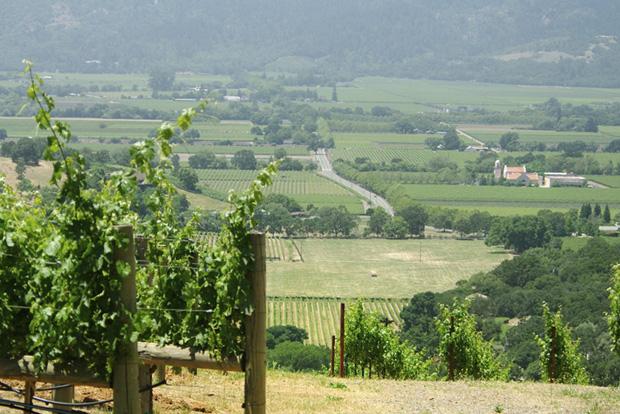 Dalla Valle Vineyards2