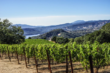 Chappellet Vineyard
